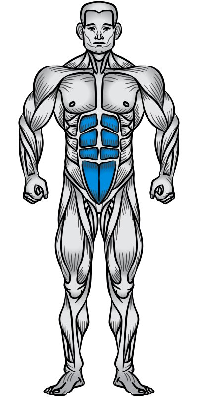 Abs Muscle Anatomy Diagram