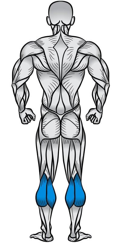 Calves Muscle Anatomy Diagram