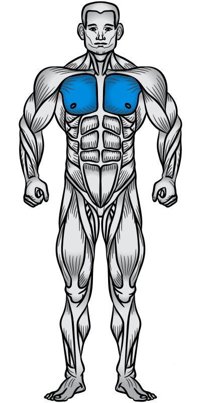 Chest Muscle Anatomy Diagram