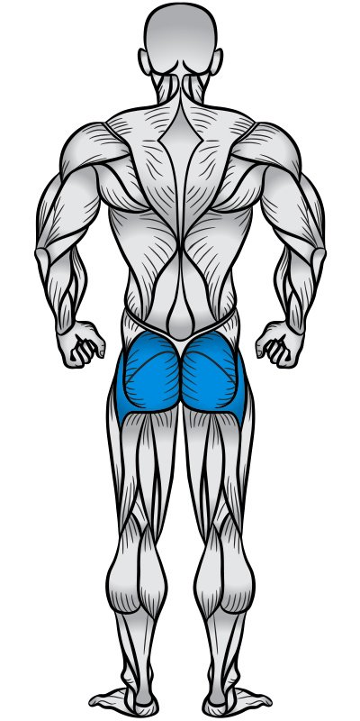 Glutes Muscle Anatomy Diagram
