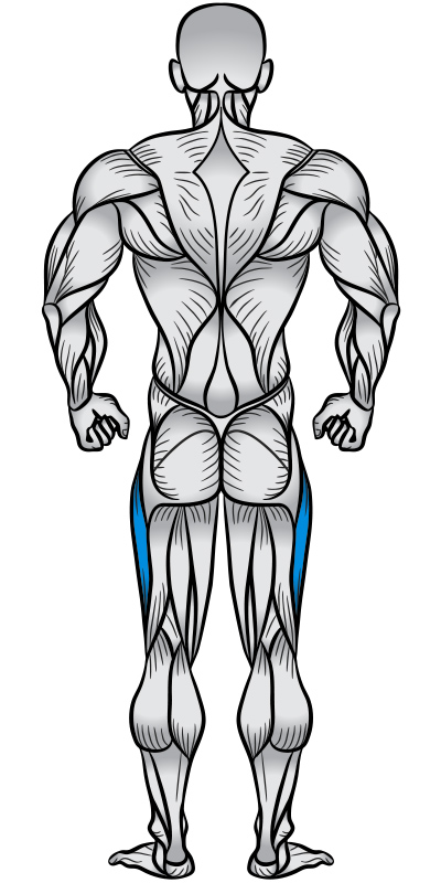 IT Band Muscle Anatomy Diagram