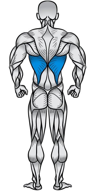 Lats Muscle Anatomy Diagram