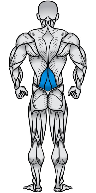 Lower Back Muscle Anatomy Diagram