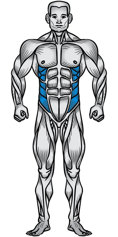 Obliques Muscle Anatomy Diagram