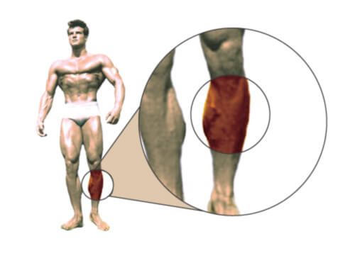 Ideal Body Measurements Calculator | Muscle & Strength