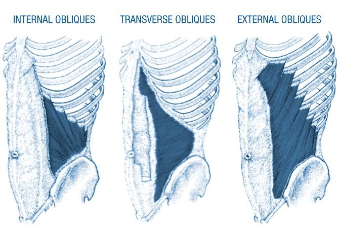 Core anatomy - obliques
