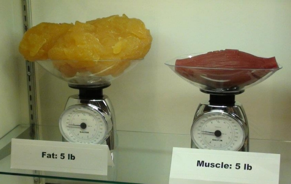 Weight Loss: Why The Scale Can Be Your Worst Enemy ...