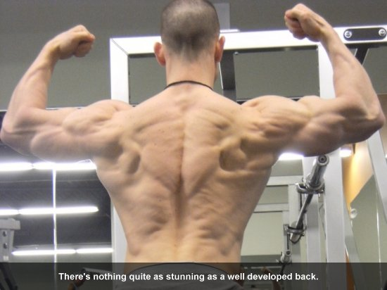 Muscular Ripped Bodybuilder Back