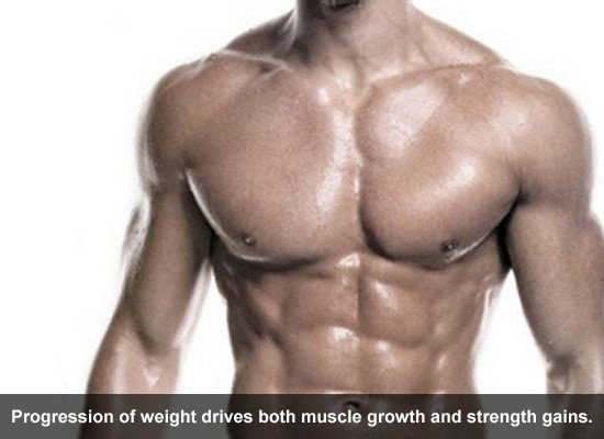 Progression of weight drives both muscle growth and strength gains.