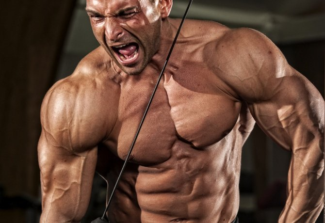 Want Big Arms? Focus On Triceps | Muscle & Strength
