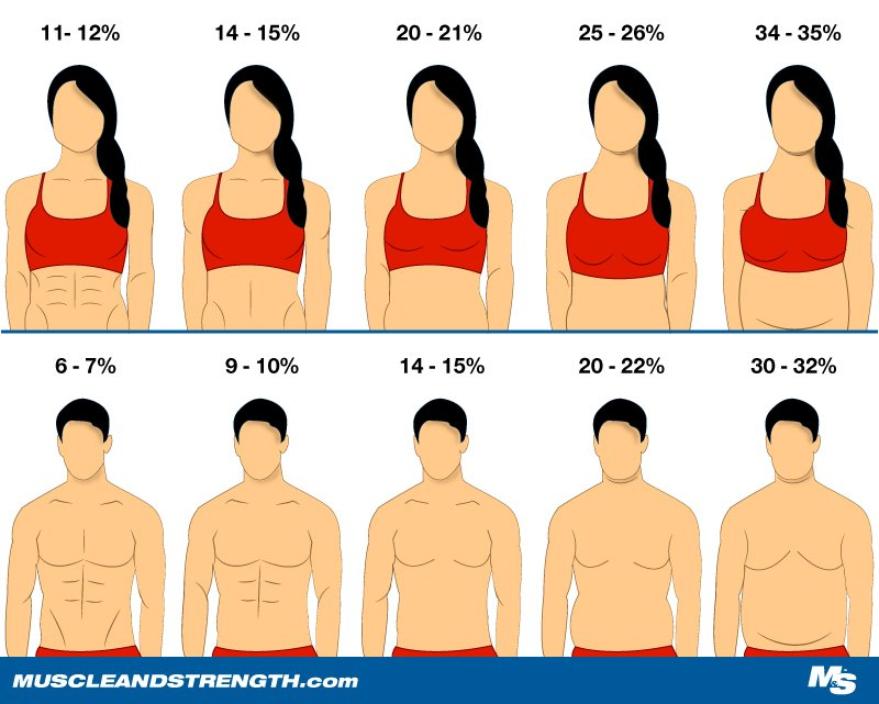 Inforgraphic representing different bodyfat percentage and abs