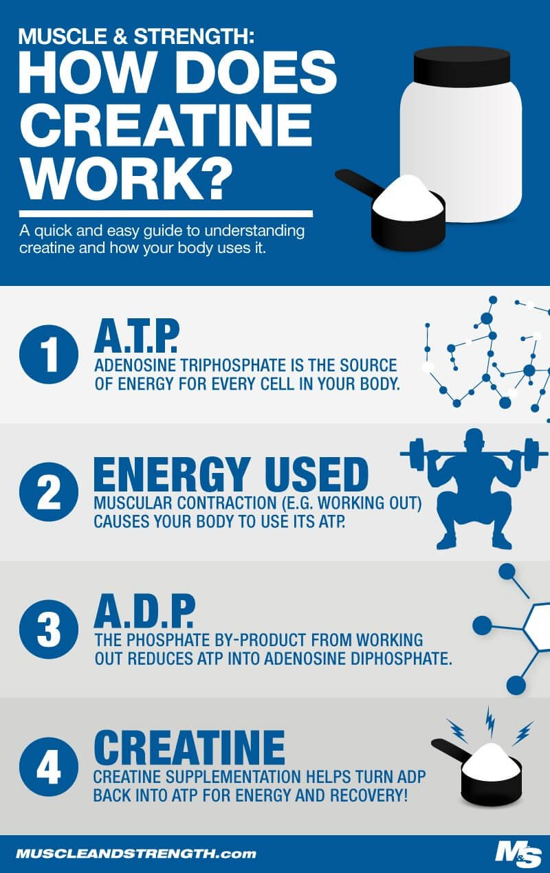 How Creatine Monohydrate Works