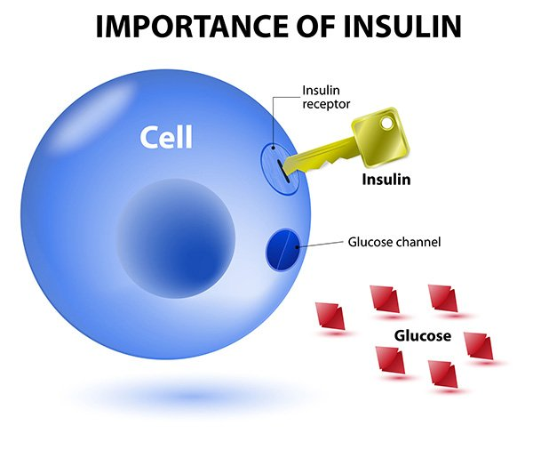 Optimizing Insulin Sensitivity: the importance of insulin
