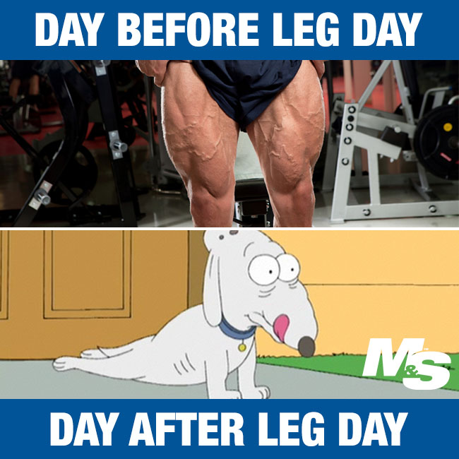 leg day meme dog - photo #25
