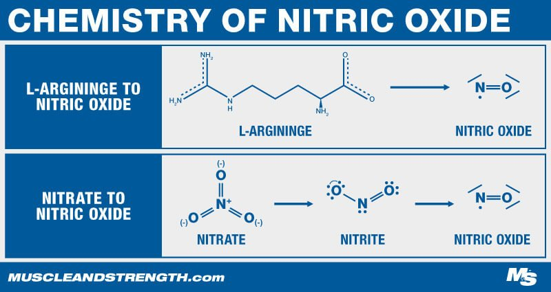 Chemistry of Nitric Oxide Graphic