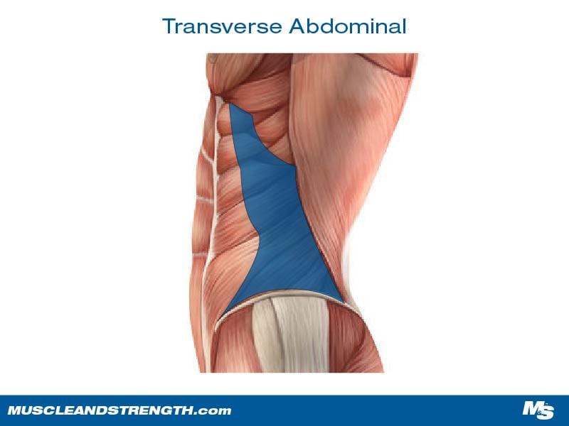 Transverse Abdominal
