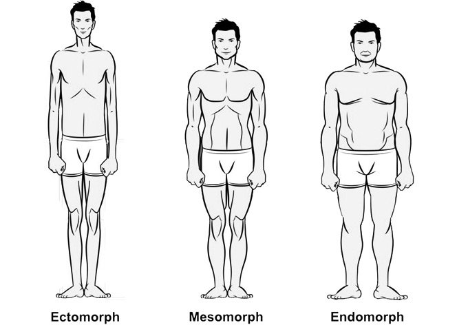 Image result for ectomorph mesomorph endomorph