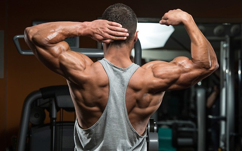 150 Of The Best Muscle Building Tips