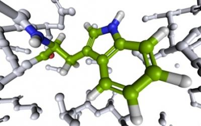 The Importance of Amino Acids