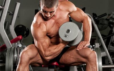 Muscle Building Supplements For Hardgainers!