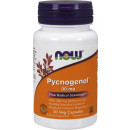 NOW Pycnogenol