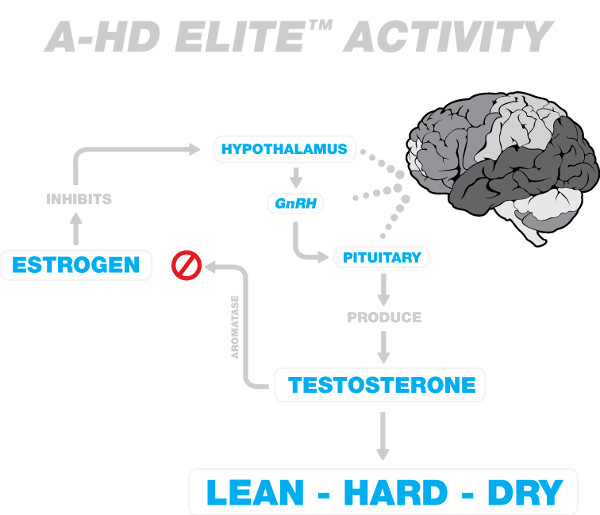 A-HD Elite Activity